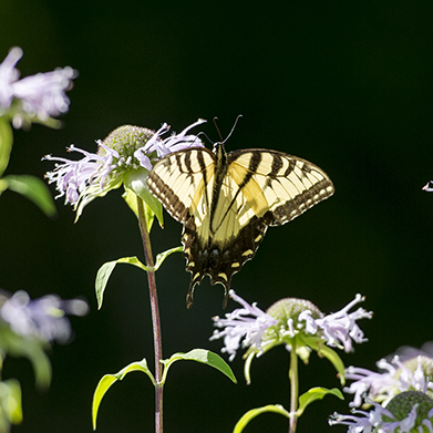 Life with Julia Jane: